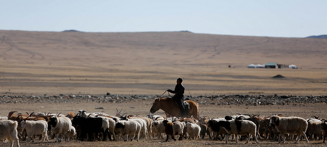 Animal husbandry, Uvurkhangai aimag (image: Flickr/ILO in Asia and the Pacific/N. Munkhbaatar)