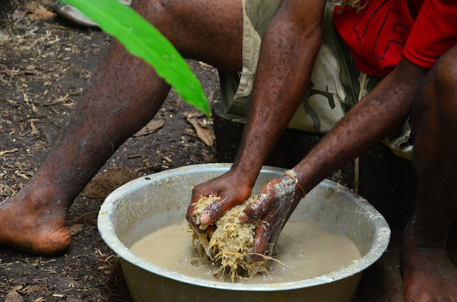 Kava preparation, SW Bay, Malekula (Flickr/Austronesian Expeditions)