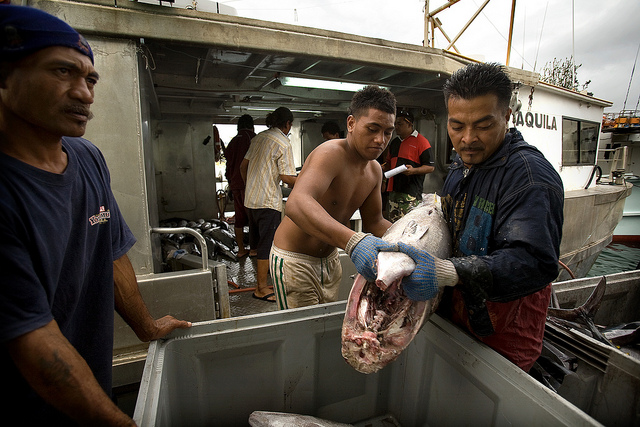 Tuna fishing in Apia, Samoa (Flickr/ADB)