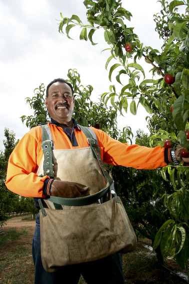 Seasonal worker in Australia (Flickr/DFATAusAID CC BY 2.0)