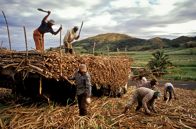 Sugar cane workers in Fiji (Flickr/ADB, CC BY-NC-ND 2.0
