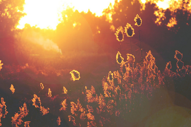 Golden sunset (Flickr/blue Mix CC BY 2.0)