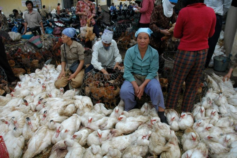Women selling poultry, Hanoi, Vietnam 2005 (Lorrie Graham/DFAT photolibrary)