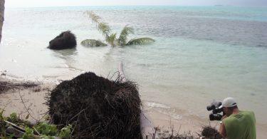 Evidence of coastal erosion, Carteret Islands, PNG (Citt/Flickr/CC BY-NC-ND 2.0)