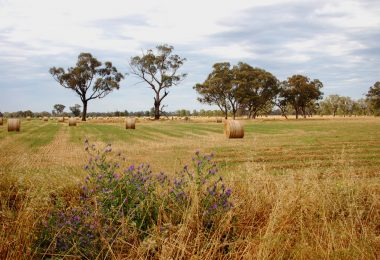 A farm in rural Victoria (Elizabeth Donoghue/Flickr/CC BY-NC-ND 2.0)