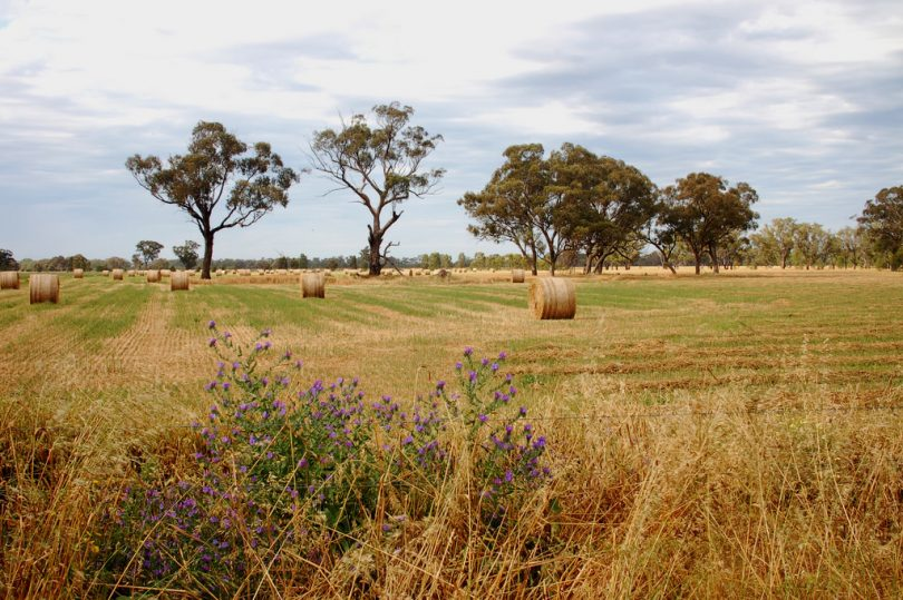 A farm in rural Victoria (Elizabeth Donoghue/Flickr/CC BY-NC-ND 2.0)