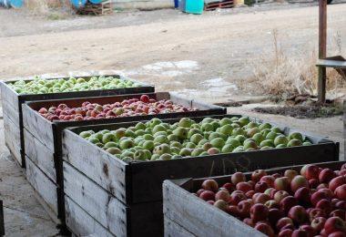Apple farm (Nat Tung/Flickr/CC BY-NC 2.0)