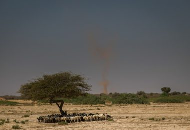 Drought in Hadhwe sub-district, Somali regional state, Ethiopia in 2017 (UNICEF Ethiopia/Flickr/CC BY-NC-ND 2.0)