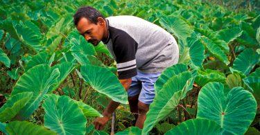 A farmer in Serua Province, Fiji (ADB/Flickr/CC BY-NC-ND 2.0)