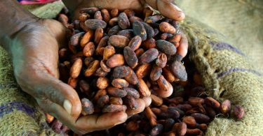 Dried cocoa beans ready for export (Irene Scott/DFAT/Flickr/CC BY 2.0)