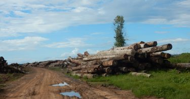 In recent years, Papua New Guinea has become the world's biggest exporter of tropical logs. Nearly all of them are sold to China (Credit: Global Witness, 2016)