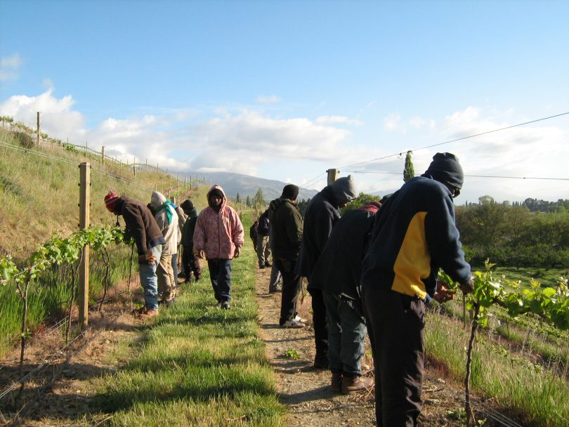 RSE workers in Central Otago (Credit: Rochelle Bailey)