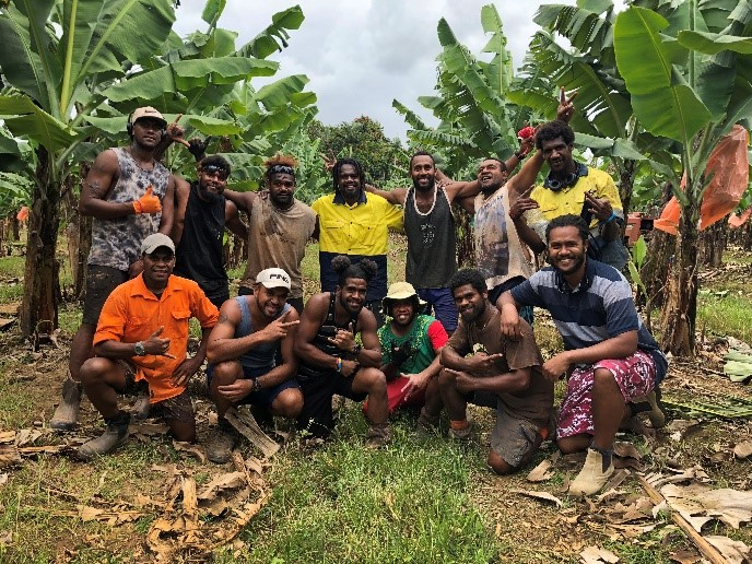 Workers from Vanuatu at Dotti Farms in Innisfail, Queensland (Credit: LMAP, Cardno)